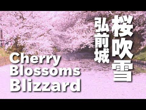 桜吹雪の弘前公園 Cherry Blossom blizzard of Hirosaki Park JAPAN  青森観光
