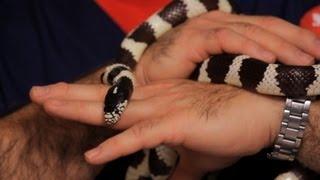 Best Pet Snake for Beginners   Pet Snakes
