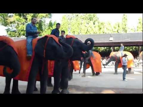 Выступление слонов, начало
