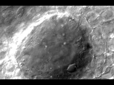 Establishment of Vertebrate Left--right Asymmetry (video S1)