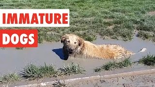 Immature Dogs | Funny Dog Video Compilation 2017