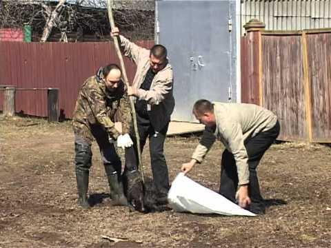 Ловушка для ондатры своими руками видео
