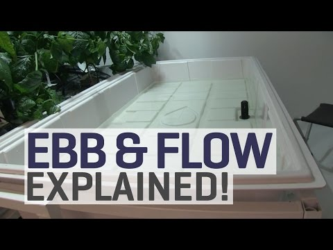 Ebb And Flow Hydroponics Explained
