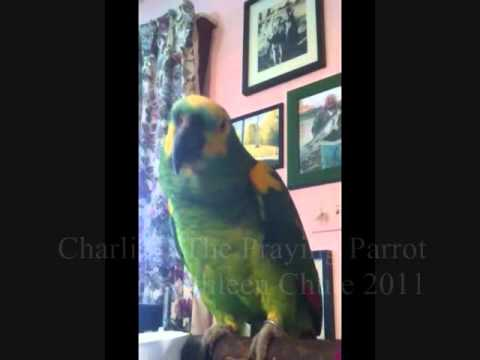 CharlieO  The Praying Parrot Whistles Dixie