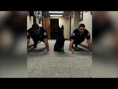 AL Police Dog Likes To Do Pushups With Officers