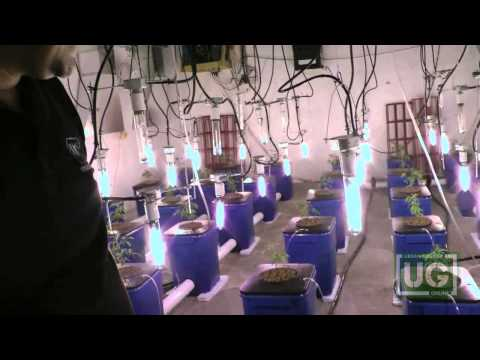 Ug 69 Under Current Hydroponic System Part 1
