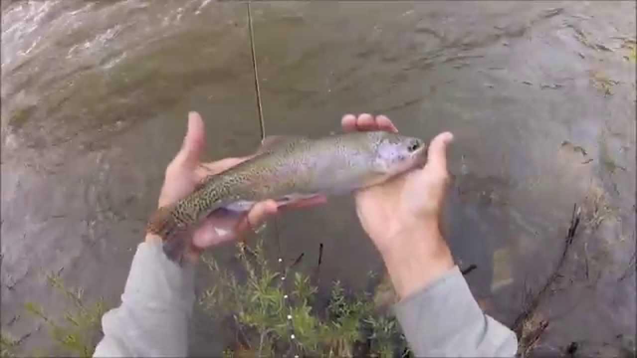 10 000 Montana Fishing Log Program fish 6 12 15