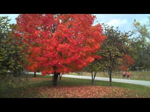 Fall foliage in Valley Forge National Historical Park