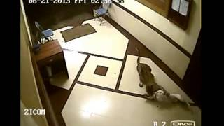 Shocking CCTV Footage  Leopard Enters House in Mumbai and Captures a Dog