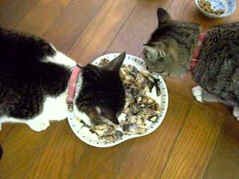 アジの開きを食べる猫