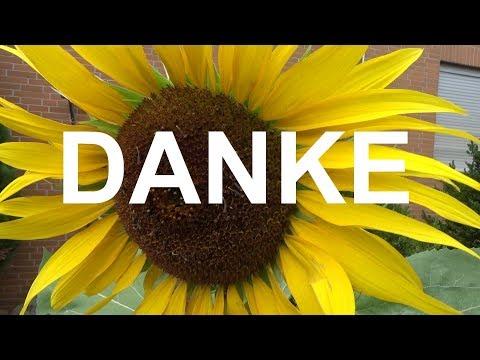 Der Herbst ist da! Was ist aus meinen Garten und Youtube Projekten geworden? Ein kleiner Rückblick