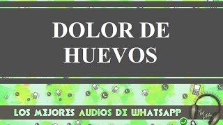 Tratamiento Del Dolor De Huevos - Los Mejores Audios De Whatsapp