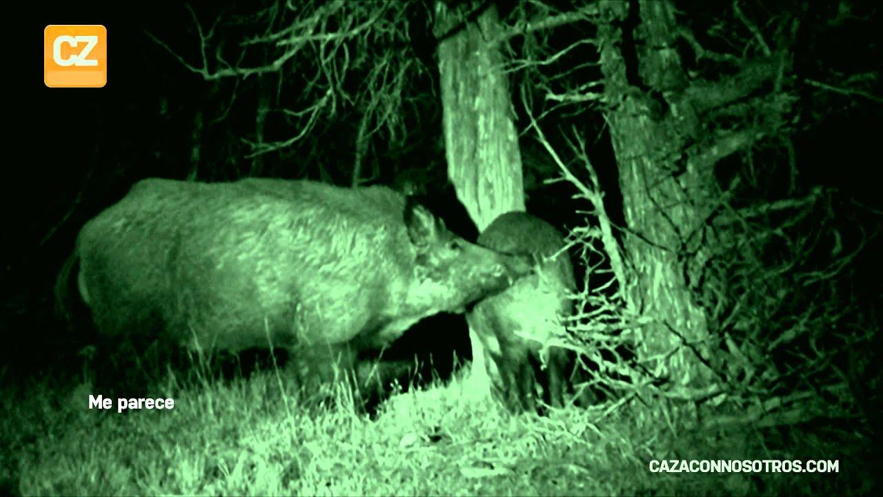 Espera de jabali caza del cochino bajo la luna llena - Como cazar ratones en casa ...