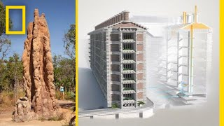 See How Termites Inspired a Building That Can Cool Itself | National Geographic