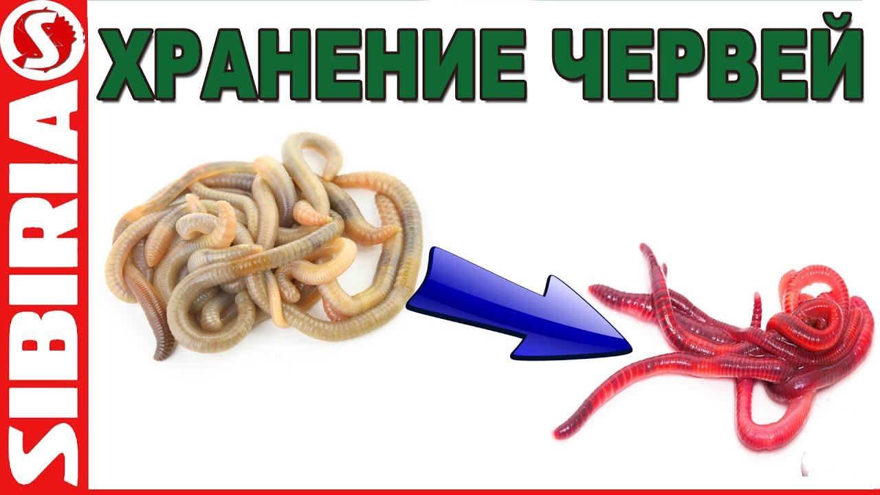 Как хранить навозного червя в домашних условиях
