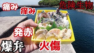 【火傷虫】釣りをしていたら死骸も危険な生物が混入