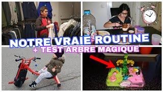 NOTRE VRAIE ROUTINE APRÈS L'ÉCOLE(crêpes party...)+ CRASH TEST ARBRE  MAGIQUE