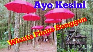 Wisata Pinus Songgon (WPS) Banyuwangi Jawa Timur || TRIP FULL
