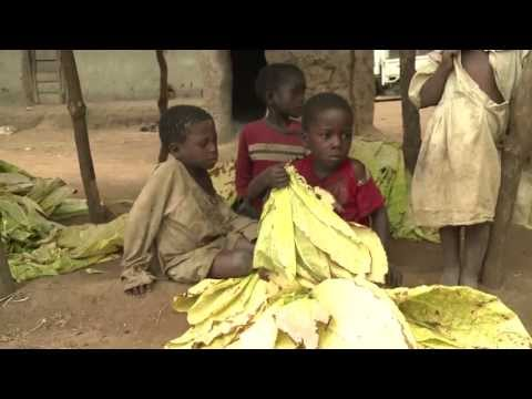 Communites Tackling Child Labour in Malawi