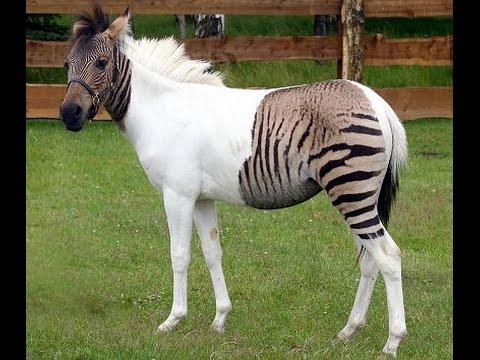 Los 5 increíbles animales híbridos
