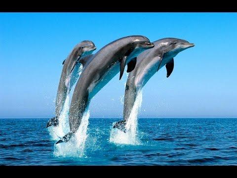МЭРИЛЭННД Франция, Канны - выступление дельфинов!