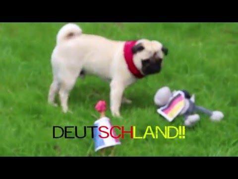 #knorakel LouisThePug aus Heikendorf