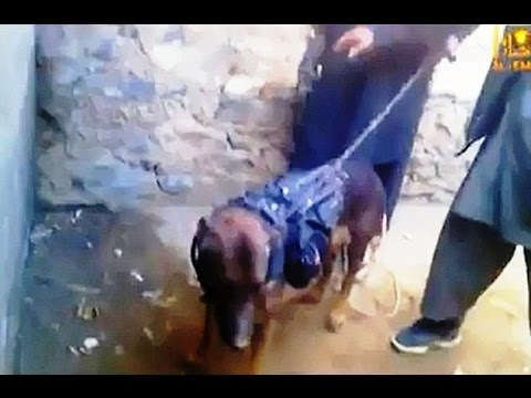 Taliban To US...We Have Your Dog, Special Forces SNIFFER DOG Became Prisoner Of Taliban!!
