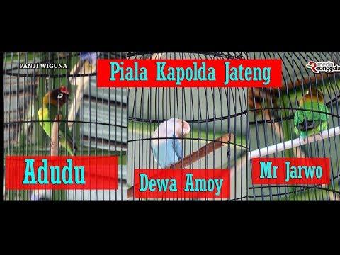 PIALA KAPOLDA JATENG - Perang Bintang Lovebird Konslet, Dewa Amoy, Mr Jarwo & Adudu