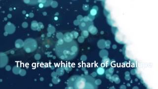 Discover sharks from Mexico, Colombia and French Polynesia