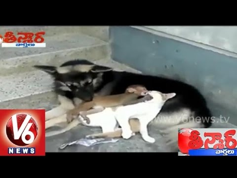 Cat dog and a monkey friendship - Teenmaar News