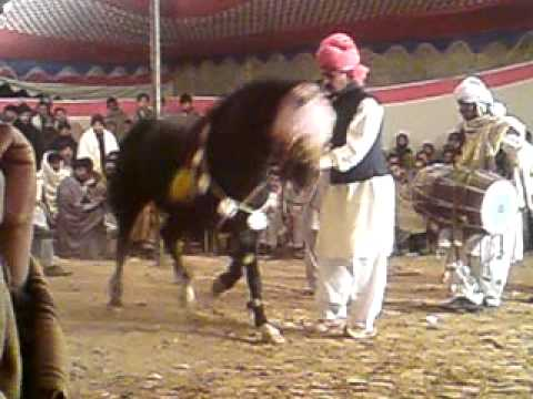 ghora dance mona dhudial chakwal on musarat wedding{mohsin hk}