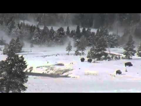 Bigfoot in Yellowstone National Park Breakdown