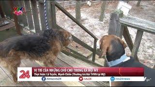 Vị trí của những chú chó trong xã hội Mỹ   VTV24