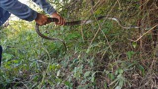 Thanh Niên Say Sỉn Đi Thăm Bẫy Rắn Và Cái Kết 😂🤣| Snake Trap