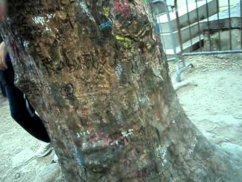 Jim Morrison's Tree