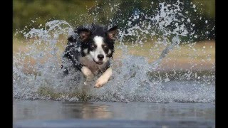 Watch Bob Dylan If Dogs Run Free video