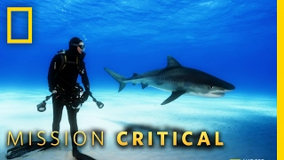 The Misunderstood Shark | Mission Critical