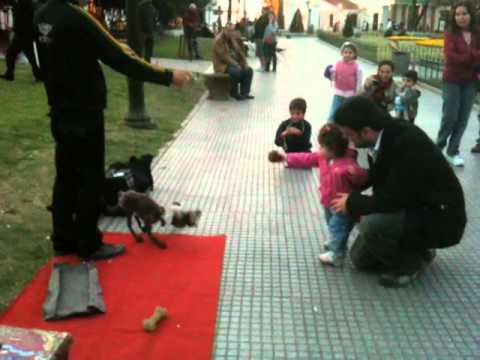 Thumbnail of video Dog Puppeteer in Recoleta
