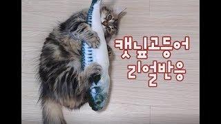 캣닢고등어 장난감인형 리얼반응 Cat toy cat reaction ケトニプおもちゃ猫の反応