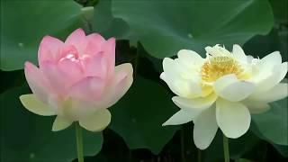 一簾幽夢  One Sweet Dream ▶ Beautiful Chinese Romantic Song