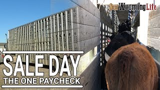 Selling Calves at Auction - From Ranch to Market