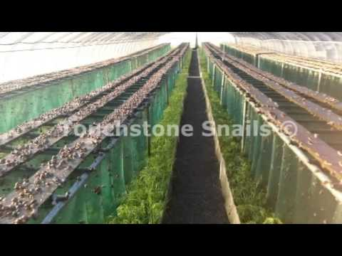 Snails Farm Snail Farming Services