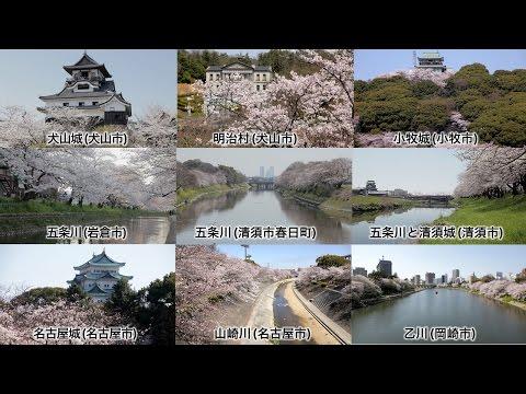 愛知の桜と春祭り