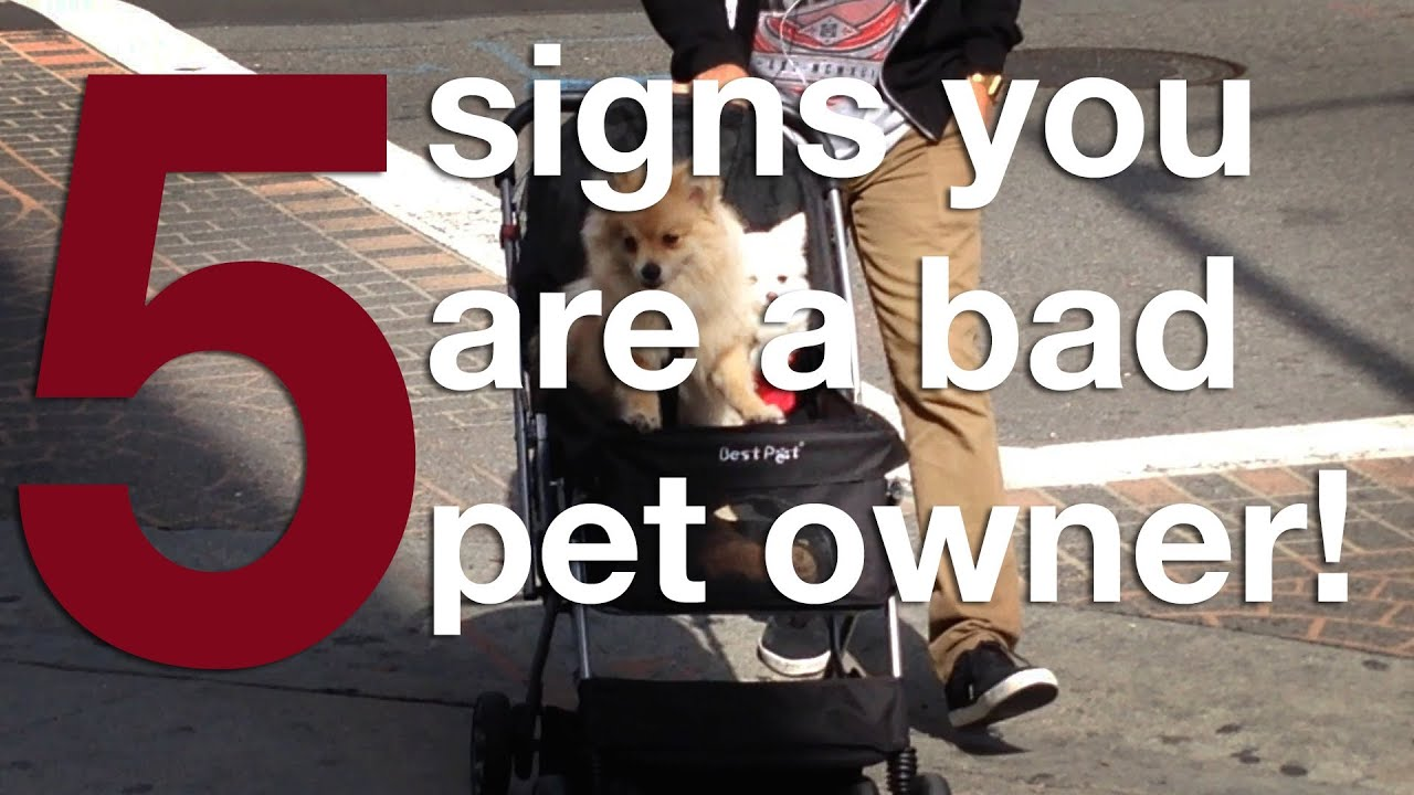Slow Down Signs >> 5 SIGNS YOU ARE A BAD PET OWNER!!! - YouTube