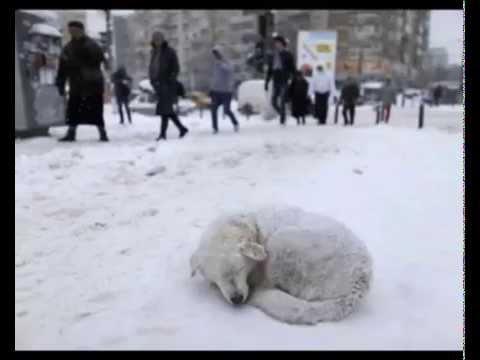 Гражданская Оборона, Егор Летов - Собака