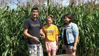Harvesting Corn - When and How to Harvest Corn | MIgardener