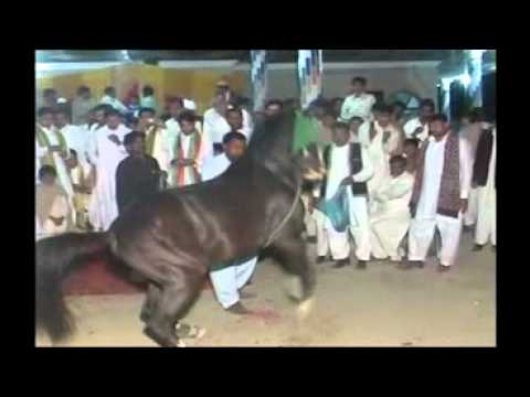 dancing horse pakistan gujrat haji chack  wedding of kamran hussain jatt