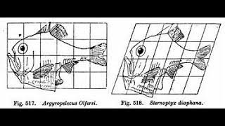 Biological Structuralism