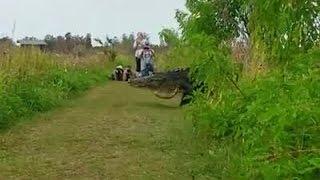 Massive Gator- Video Credit Kim Joiner