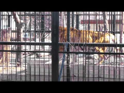 タツオ 帯広動物園 場外撮影
